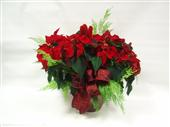 Large RED Poinsettia in Belleville ON, Live, Love and Laugh Flowers, Antiques and Gifts