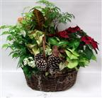 Large Poinsettia Mixed Planter in Belleville ON, Live, Love and Laugh Flowers, Antiques and Gifts