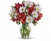 Dancing in Daisies in Smyrna GA, Floral Creations Florist