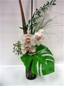 Tropical Cymbidium in Belleville ON, Live, Love and Laugh Flowers, Antiques and Gifts