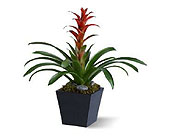 GB66 ''Bromeliad'' House Plant in Oklahoma City OK, Array of Flowers & Gifts