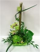 Tropical Greens in Belleville ON, Live, Love and Laugh Flowers, Antiques and Gifts
