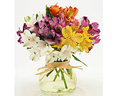 Mixed-Colorful-Alstroemeria-Red-White-Pink-Yellow- in San Clemente CA, Beach City Florist