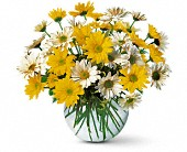 Dashing Daisies in Rock Island, Illinois, Colman Florist