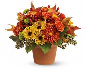 Sugar Maples in San Clemente CA, Beach City Florist