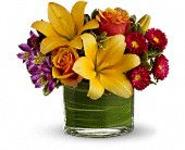 Teleflora's Blossoms of Joy in Woodbridge ON, Extravaganza Florist Ltd.