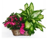 Double Basket in Smyrna GA, Floral Creations Florist