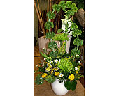 Love green in Melbourne FL, Paradise Beach Florist & Gifts