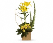Teleflora's Bamboo Tropics in Etobicoke ON, Elford Floral Design