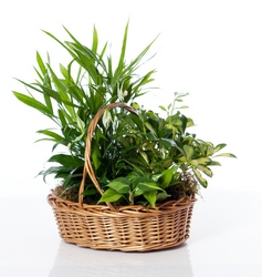 Green and Growing Basket in Little Rock, Arkansas, Tipton & Hurst, Inc.