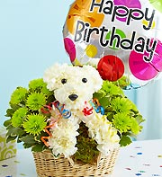 Party Animal in Chambersburg PA, All Occasion Florist
