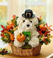 Pilgrim Pooch in Chambersburg PA, All Occasion Florist