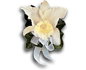 Japhet Orchid Corsage in Burlington NJ, Stein Your Florist