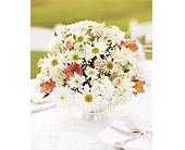 Daisy Joy Centerpiece in Big Rapids, Michigan, Patterson's Flowers, Inc.