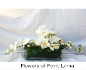 Catalina in San Diego CA, Flowers Of Point Loma