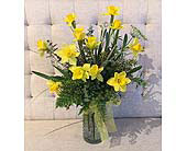 Springy Daffodils in Charleston SC, Tiger Lily Florist Inc.