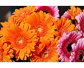 Orange Mix Flowers in San Clemente CA, Beach City Florist
