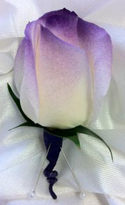 PURPLE TIP WHITE ROSE BOUTONNIERE in Ossining NY, Rubrums Florist Ltd.