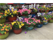 Patio Planter in Kimberly WI, Robinson Florist & Greenhouses