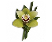 Green Orchid Boutonniere in Trumbull CT, P.J.'s Garden Exchange Flower & Gift Shoppe