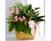 The FTD� Living Spirit� Dishgarden in San Clemente CA, Beach City Florist
