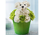 Pup-cake in Bloom� in Richmond VA, Flowerama