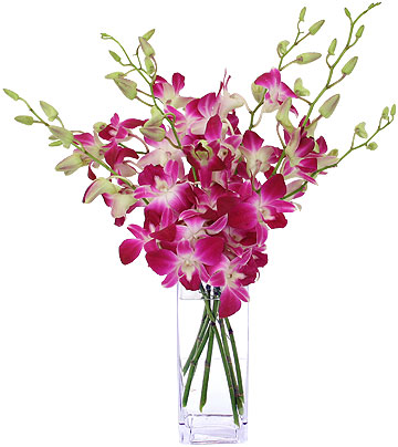 ELEGANT ORCHID BOUQUET in Vienna, Virginia, Vienna Florist & Gifts