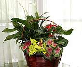 Anthurium Garden in Longview TX, Casa Flora Flower Shop
