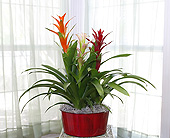 10 Inch Bromeliad Garden in Longview TX, Casa Flora Flower Shop