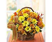 Fall Daisy Bouquet in Cicero NY, Guignard Florist