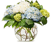 Mighty Hydrangea in Methuen MA, Martins Flowers & Gifts