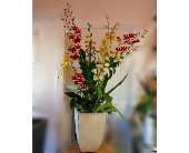 Tall and Handsome in Orinda, California, Misaghi Design Orinda Florist