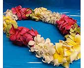 Colorful Double in Kihei HI, Kihei-Wailea Flowers By Cora
