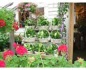 Our own fantastic dish gardens in Palmer MA, Maryniski's Flowers & Greenhouse