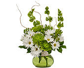 Dots and Daisies in Methuen MA, Martins Flowers & Gifts