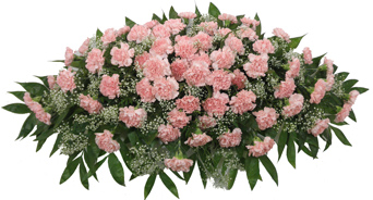 Timeless Traditions Pink Carnation Casket Spray in Indianapolis IN, Steve's Flowers & Gifts
