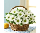 White Daisy Basket in Smyrna GA, Floral Creations Florist