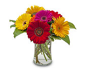 Fruity in Methuen MA, Martins Flowers & Gifts