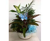 Blue Butterfly in Katy, Texas, Kay-Tee Florist on Mason Road