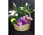 Basket of Color in Highland IN, Brumm's Bloomin Barn