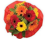 Gerbera Daisy Bouquet in Timmins ON, Timmins Flower Shop Inc.