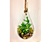 Teardrop Terrarium in Greeley, Colorado, Mariposa Plants & Flowers