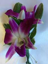 PURPLE DENDROBIAN ORCHID BOUTONIEERE in Ossining NY, Rubrums Florist Ltd.