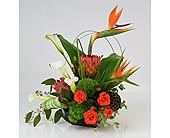 Mahalo in Indianapolis IN, Gillespie Florists