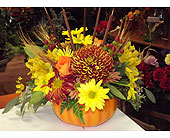 Town & Country Pumpkin in Manhasset NY, Town & Country Flowers