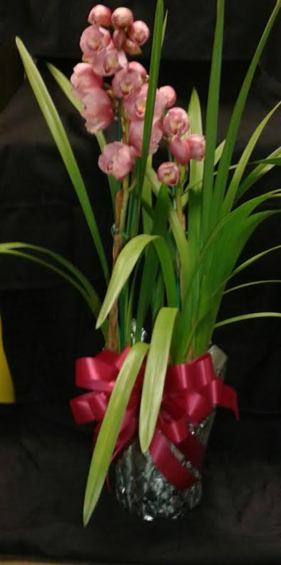 The King of Orchids  in Kingsport, Tennessee, Holston Florist Shop Inc.