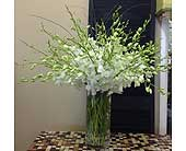 Delightful Orchids in Smyrna GA, Floral Creations Florist