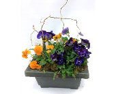 Pansy Garden in Belleville ON, Live, Love and Laugh Flowers, Antiques and Gifts