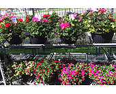 12 Hanging Baskets in Belleville ON, Live, Love and Laugh Flowers, Antiques and Gifts