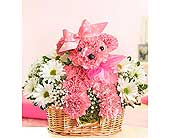 Princess Poodle in Aston PA, Wise Originals Florists & Gifts